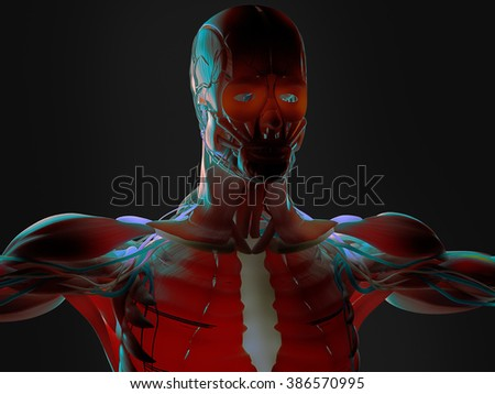 Human anatomy 3D futuristic technology scan.Shoulders and head. Vibrant colors. Biological information. Sci-fi