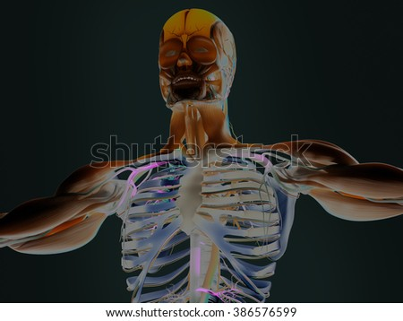 Human anatomy 3D futuristic technology scan. Torso and head. Vibrant colors. Biological information.Sci-fi. - stock photo
