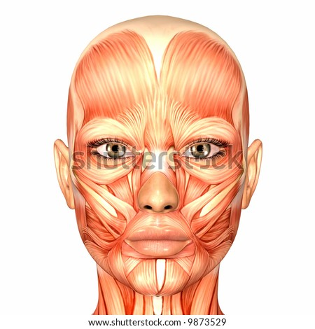 Human Anatomy -  Face - stock photo