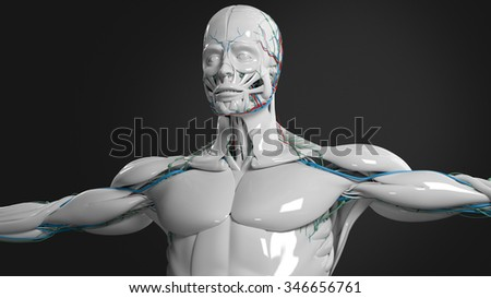 Human anatomy face and torso in porcelain finish on dark background. - stock photo
