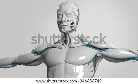 Human anatomy face and torso in porcelain finish on light background. - stock photo