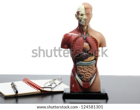 Human anatomy model on the table.White background - stock photo