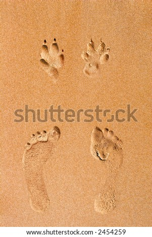 Human and dog footprints on a sea shore golden sand - stock photo