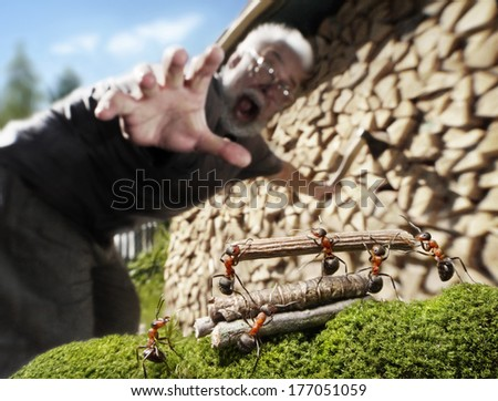 human, ants and firewood, robbery or help, ant tales - stock photo