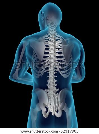Human back - stock photo