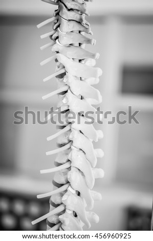 human back bone model with black and white color concept