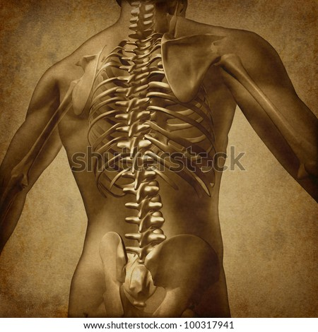 Human back medical document an old vintage grunge parchment texture for backache and back pain with an upper torso body skeleton with spine and vertebral column as a medical health care concept. - stock photo