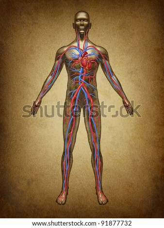 Human blood circulation color grunge vintage circulation in the cardiovascular System with heart anatomy as a medical health care symbol of an inner organ as a medical chart for health education. - stock photo