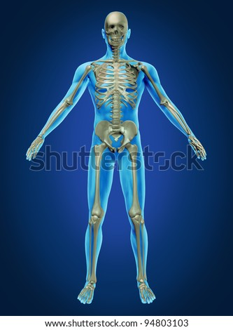 Human body and skeleton with the skeletal anatomy in a rested pose on a dark blue background as a health care and medical concept. - stock photo