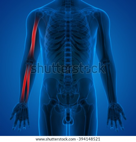 Human Body Bone Joint Pains