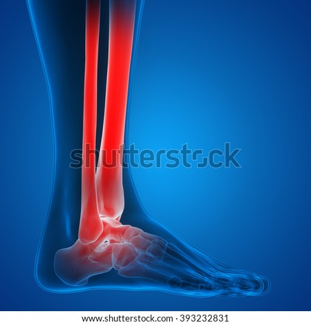 Human Body Bone Joint Pains (Foot joints and Bones) - stock photo