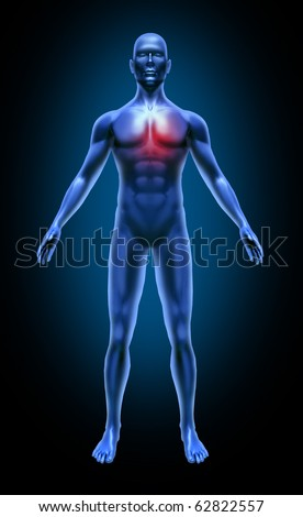 Human body heart pain stroke circulation attack cholesterol coronary medical x-ray pose joints muscles blue - stock photo