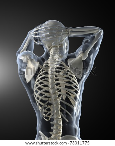 Human Body Medical Scan back view - stock photo