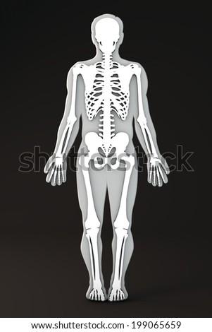 Human body outline section skeleton - stock photo