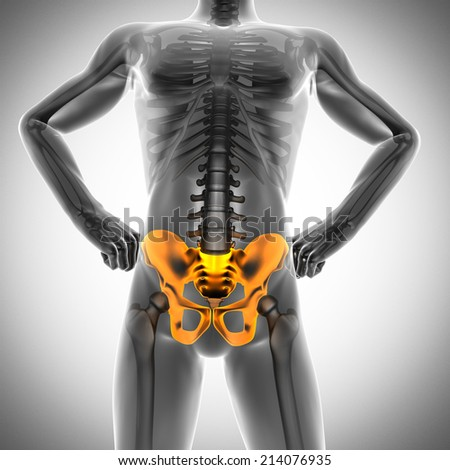 human bones radiography scan. x-ray  image - stock photo