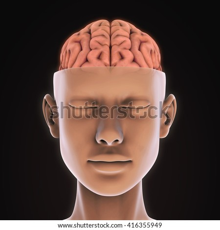 Human Brain Anatomy Illustration. 3D rendering - stock photo