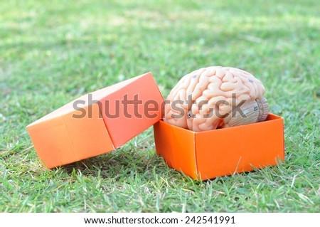 human brain and box - stock photo
