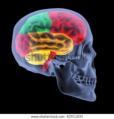 human brain by X-rays. isolated on black. - stock photo