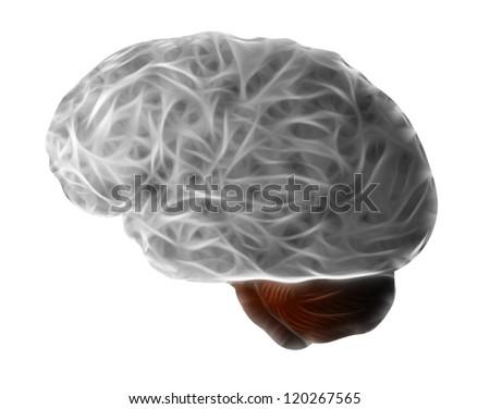 human brain - cerebrum - grey matter - stock photo