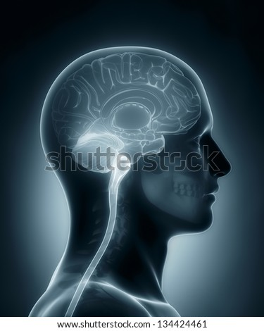 Human brain cross section medical x-ray scan - stock photo