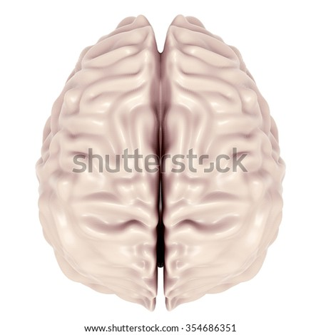 Human brain 3D model from above - stock photo