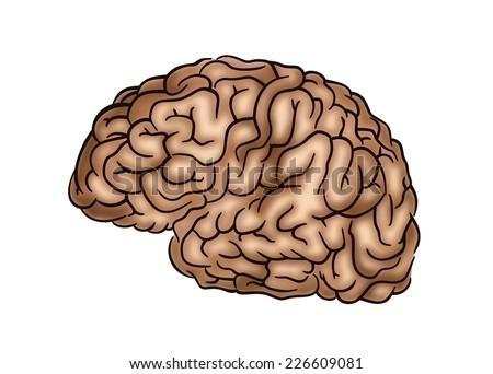 Human Brain - Illustration on white - stock photo
