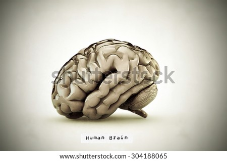 human brain in old illlustration isolated on white background - stock photo