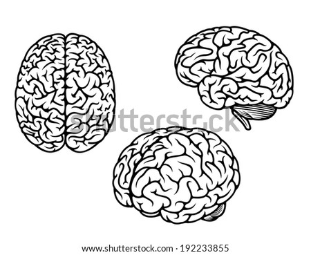 Human brain in three planes for medical logo design. Vector version also available in gallery - stock photo