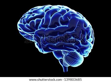 Human brain in x-ray optics with gloss - stock photo