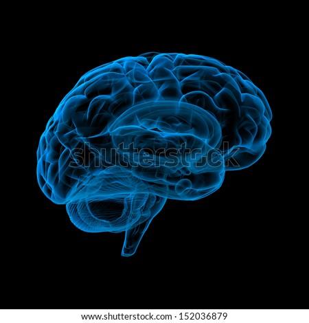 Human brain in x-ray view - stock photo