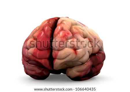Human Brain Isolated - stock photo