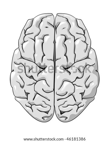 Human brain isolated on white as a concept of medicine. Vector version is also available - stock photo