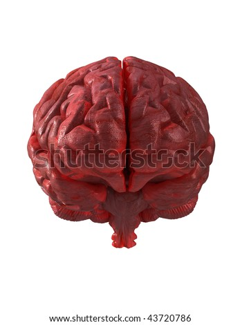 Human brain isolated with clipping path - stock photo