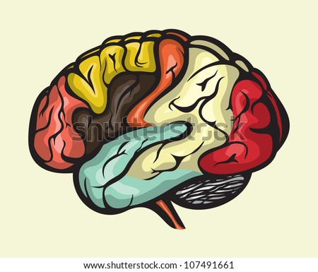 human brain lateral view - stock photo
