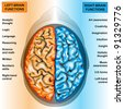 Human brain left and right functions - stock photo