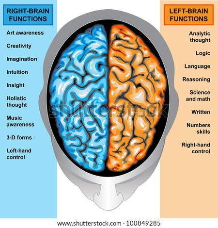 Human brain diagram stock images royalty free images vectors human brain left and right functions ccuart Choice Image