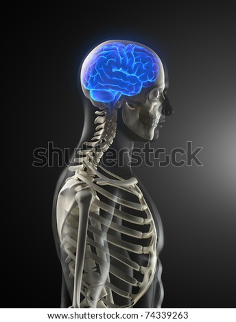 Human Brain Medical Scan - stock photo
