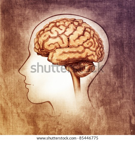human brain medical schematic simplified illustration (painting) - stock photo