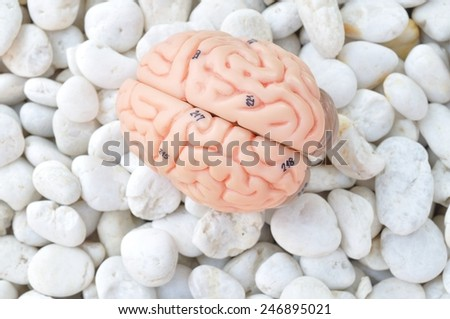 human brain model on white stone background