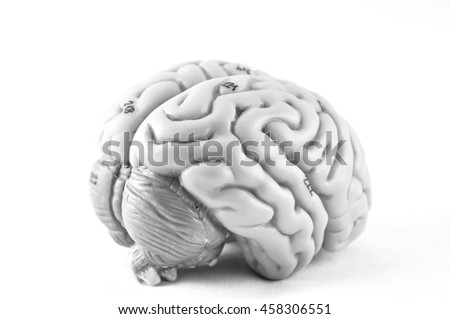 human brain model with black and white color style  - stock photo
