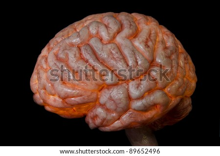 Human brain nd spine lateral  isolated on black background - stock photo