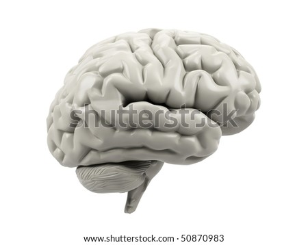 Human brain on a white background. - stock photo