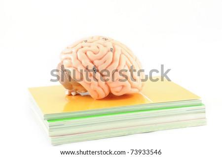 human brain on the book - stock photo