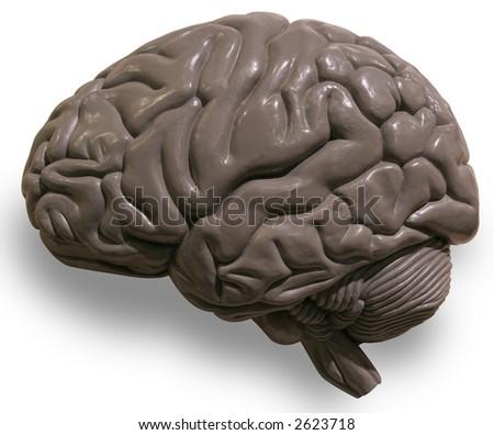 Human brain on white background - stock photo