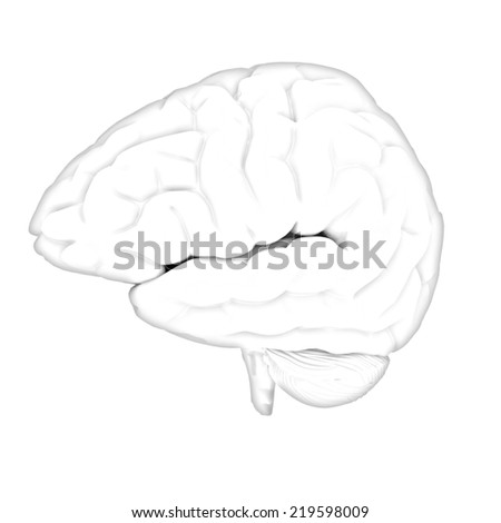 Human brain. Pencil drawing