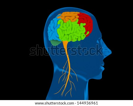 human brain representing mental neurological activity of the human organ - stock photo