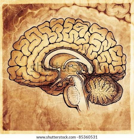 human brain stylized artistic style - painting - stock photo