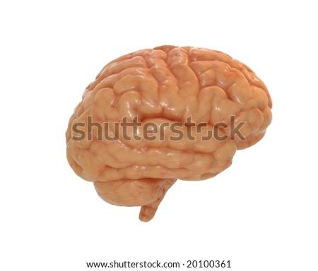 Human brain with alpha mask - stock photo