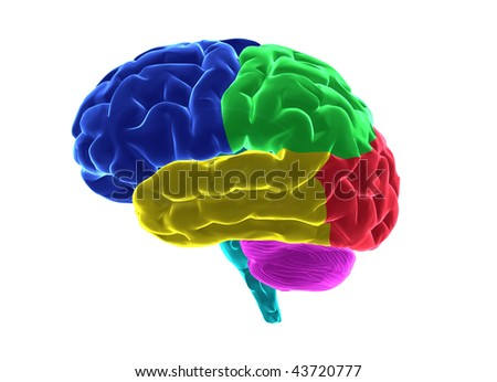 Human brain with clipping path - stock photo