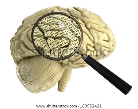 human brain with Magnifying Glass - stock photo